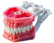 Model_Arma_Dental